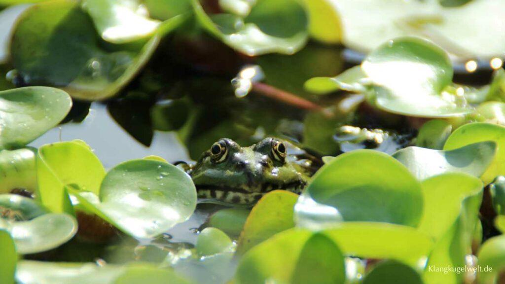 Figur vom Froschkönig mit goldener Kugel vor Seerosenblättern